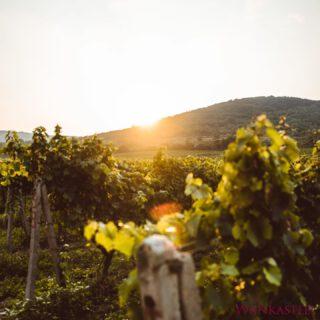 GOODMORNING 🤍  Happy monday!  #vineyards #mondayvibes #hetwijnkasteel
